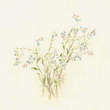 Forget-me-nots watercolor painting. The hand painted watercolor of forget-me-not flowers Royalty Free Stock Images