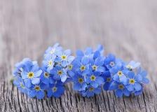 Forgetmenot blommor Arkivbild