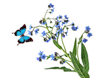 Forgetmenot and Butterfly Stock Images