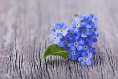 Fleurs de Forgetmenot Photos stock