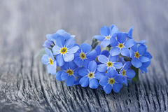 Forgetmenot flowers Stock Photos