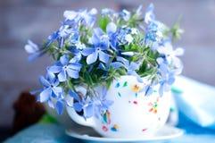 Forgetmenot flowers Stock Photos