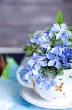 Forgetmenot flowers Royalty Free Stock Images
