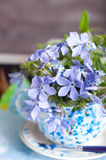 Forgetmenot flowers Royalty Free Stock Image