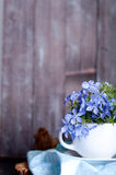Forgetmenot flowers Stock Images