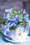 Forgetmenot flowers Royalty Free Stock Photos