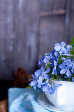 Forgetmenot flowers Royalty Free Stock Photography