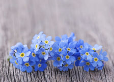 Forgetmenot flowers Stock Photography