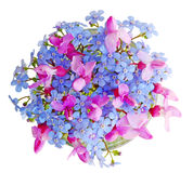 Forgetmenot and Redbud Royalty Free Stock Photo