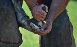 Forging hooves Stock Photos