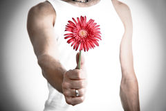 Forgive me. Man with red flower in hand Royalty Free Stock Photography