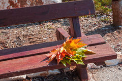 Forgotten bouquet of autumn leaves Royalty Free Stock Photo
