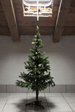 Forgotten christmas tree Royalty Free Stock Photography