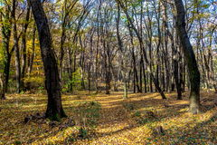 Forgotten forest path at autumn, November, covered with colorful foliage Stock Photos