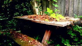 Forgotten picnic. Wooden picnic table covered in leaves and overgrown vines Stock Image