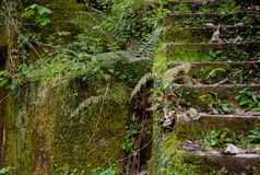 Forgotten stairs near a river. royalty free stock image