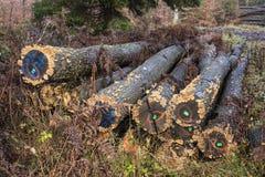 Forgotten timber Royalty Free Stock Photos