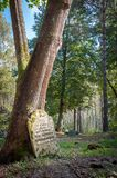 Forgotten tombstone standing alone in a forest. A very old, forgotten tombstone based on a tree trunk next to a road leading through a forest glade and further Royalty Free Stock Photography