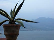 Forground de um vaso com uma planta gorda e afinal do golfo de Gaeta no sul de Itália Imagens de Stock Royalty Free
