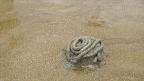 Fori dei granchi sulla spiaggia video d archivio