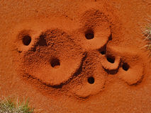 Fori della formica di Spinifex Fotografie Stock Libere da Diritti
