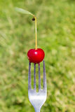 Fork with berries Royalty Free Stock Photography