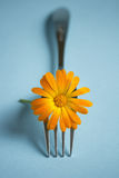 Fork with Blossom Stock Photos