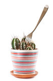 Fork in cactus Royalty Free Stock Photo