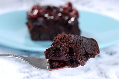 Fork of cranberry brownie dessert Stock Images