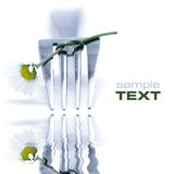 Fork and daisy. On white background with soft focus reflected in the water. Sample text royalty free stock photography