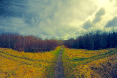 Multiple paths in a field Stock Photography