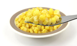 Fork filled with corn Stock Photography