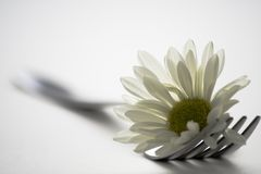 Fork and flower royalty free stock photo