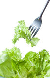 Fork with green salad Stock Images