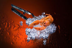 Fork, Ice And Crawfish Stock Photo