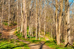 Free Fork In The Trail Stock Photography - 64647852