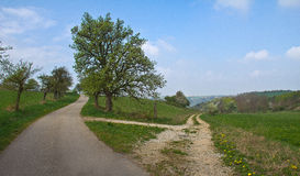 Fork in the road. Spring landscape with a fork in the road Royalty Free Stock Photo