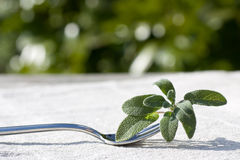 Fork with sage Royalty Free Stock Images