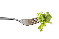 Fork with salad Royalty Free Stock Photo