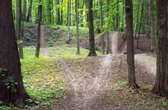 Forked path through spring green forest Royalty Free Stock Image