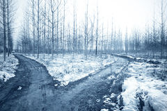 Forked road in the grove. Winter landscape with snow and forked road in the forest Royalty Free Stock Photos
