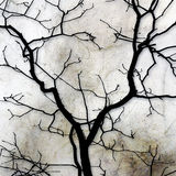 Forked Tree Silhouette Abstract. Stock Images