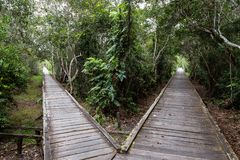 Forked wooden trail in the jungle on the way to Camp Leakey, the most famous feeding station for Orangutans inside the park. Forked wooden trail in the jungle on stock photo