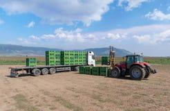 Forklift ο φορτωτής φορτώνει τα εμπορευματοκιβώτια πλαστικών σε ένα φορτηγό στον τομέα στοκ φωτογραφία