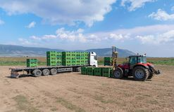 Forklift loader loads plastics containers on a truck in the field. stock photography
