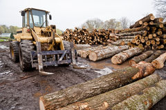 Forklift With Logs in Lumber Area Stock Images