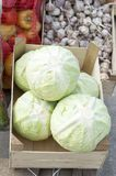 Forks of white cabbage are exposed for sale in cardboard boxes under the open sky. stock photography