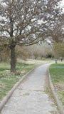 Forlì parkerar ekorren för Italien naturträd royaltyfri bild
