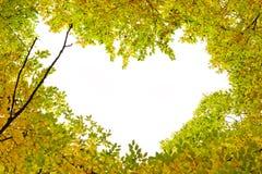 A formé le coeur des feuilles d'automne et s'embranche des arbres images libres de droits
