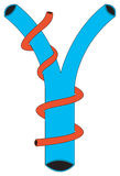 Form#2 lymphatique photographie stock libre de droits